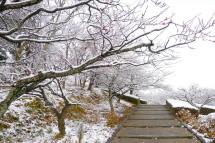 Snow20120117e