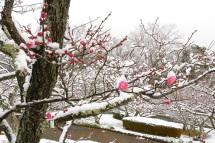 Snow20120117f