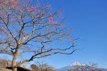 Iwamoto20120204c