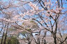 Kaika201204_01e