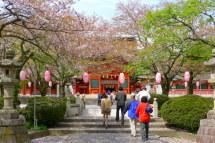 Sakura20120415a