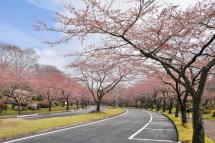 Sakura20120415k