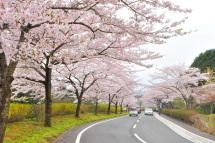Sakura20120421b