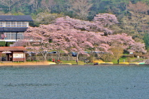 Sakura20120421g