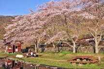 Sakura20120421h