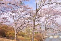 Sakura20120421j