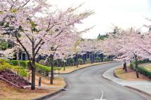 Sakura20120421o