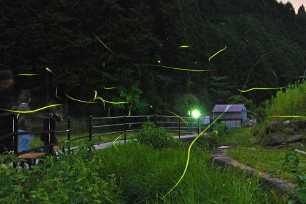 Mz_hotaru2012h
