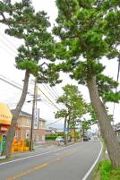 Fujiedabar03