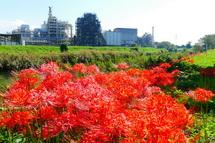 Higanbana2012k