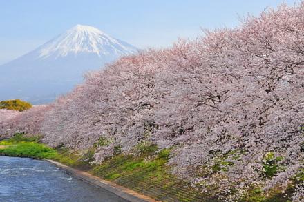 Sakura20130323a