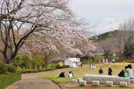 Sakura20130323d