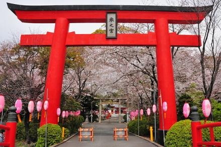 Sakura20130323j