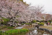 Sakura20130323l