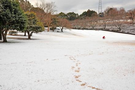 Snow20140118d