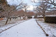 Snow20140118f