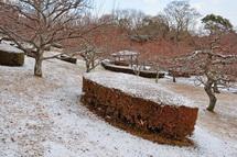 Snow20140118g