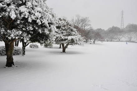 Snow20140208j