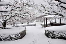 Snow20140208k