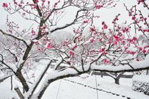 Snow20140208n