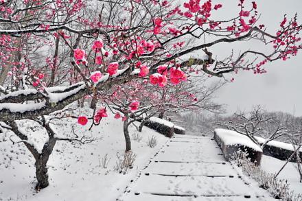 Snow20140208o