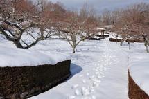 Snow20140209g