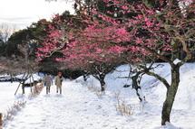 Snow20140209i