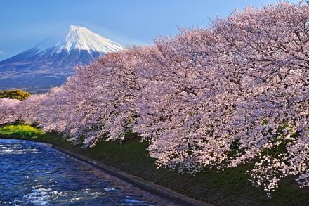 Sakura20140331a
