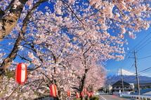 Sakura20140331c