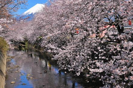 Sakura20140331d