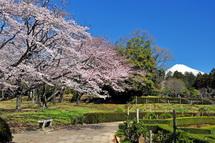 Sakura20140331g
