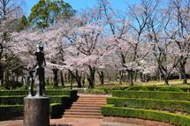 Sakura20140331h