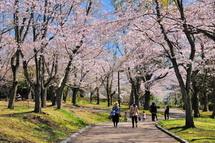 Sakura20140331i