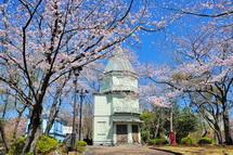 Sakura20140331j