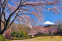 Sakura20140331k