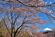 Sakura20140331l