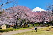 Sakura20140331m