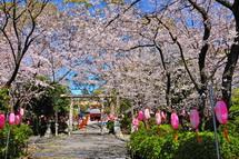 Sakura20140331r