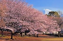 Sakura20140331t