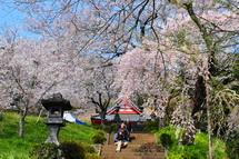 Miyazakura2014k