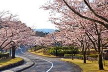 Fujisankansakura2014f