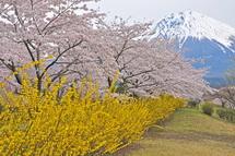 Fujizakurapark2014b