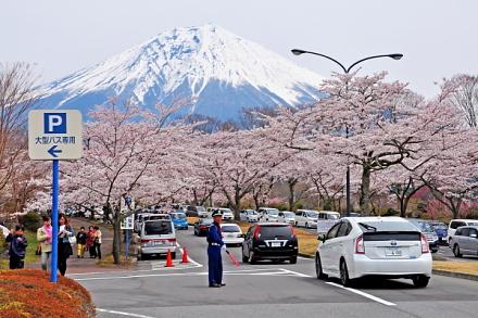 Fujizakurapark2014e