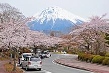 Fujizakurapark2014f
