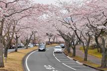 Fujizakurapark2014i