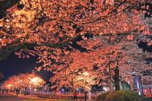Sengen_gagaku09