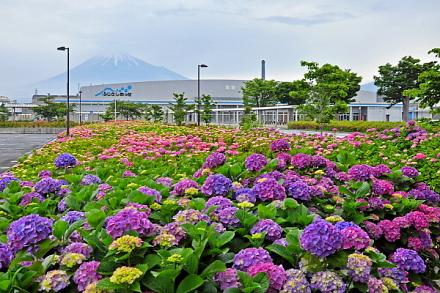 Messe_ajisai2014a
