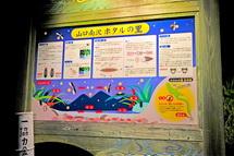 Minamizawa_hotaru2014b