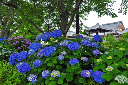 Daitsuji20140628f