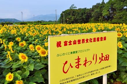 Fujisanhimawari01